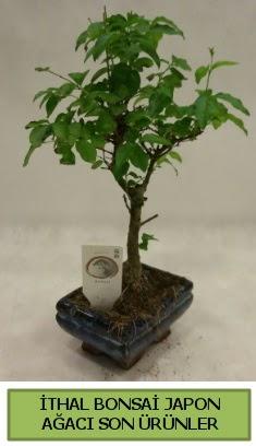 İthal bonsai japon ağacı bitkisi  Antalya Melisa hediye sevgilime hediye çiçek
