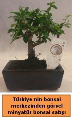 Japon ağacı bonsai satışı ithal görsel  Antalya Melisa çiçek yolla