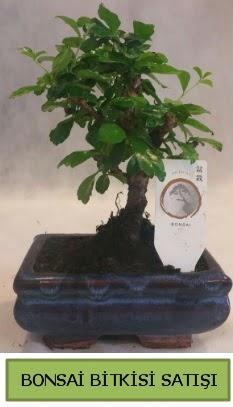 Bonsai ithal görsel minyatür japon ağacı  Antalya Melisa ucuz çiçek gönder