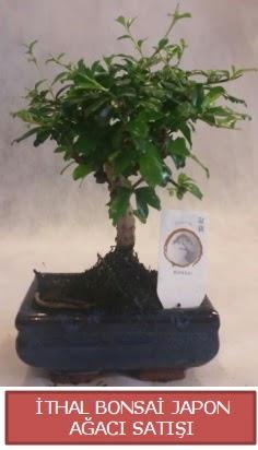 İthal küçük boy minyatür bonsai ağaç bitkisi  Antalya Melisa çiçekçi telefonları