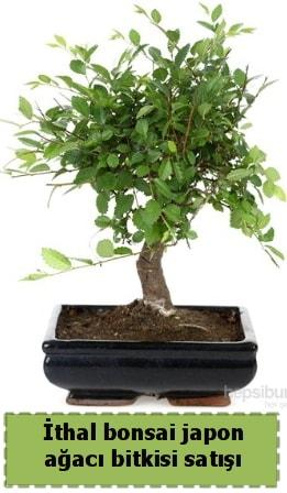 İthal bonsai saksı çiçeği Japon ağacı satışı  Antalya Melisa Melisa İnternetten çiçek siparişi