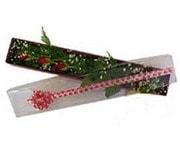 Antalya Melisa hediye çiçek yolla  3 adet gül.kutu yaldizlidir.