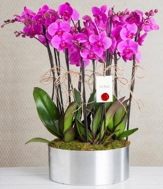 11 dallı mor orkide metal vazoda  Antalya Melisa çiçek gönderme sitemiz güvenlidir
