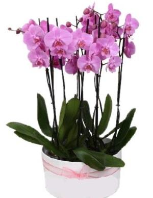 Beyaz seramik içerisinde 7 dallı mor orkide  Antalya Melisa çiçekçi telefonları