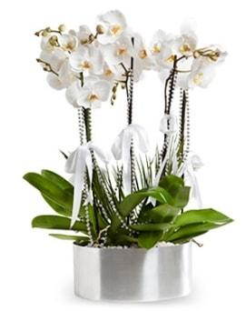 Beş dallı metal saksıda beyaz orkide  Antalya Melisa çiçek yolla