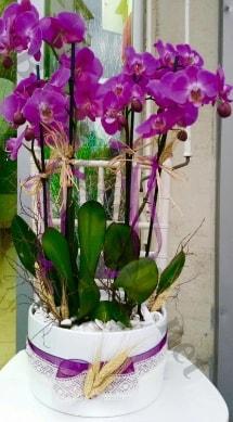 Seramik vazoda 4 dallı mor lila orkide  Antalya Melisa online çiçek gönderme sipariş