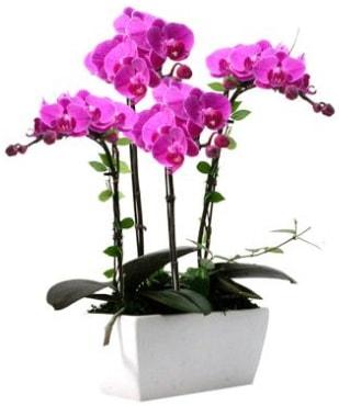 Seramik vazo içerisinde 4 dallı mor orkide  Antalya Melisa çiçek satışı