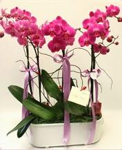 Beyaz seramik içerisinde 4 dallı orkide  Antalya Melisa ucuz çiçek gönder