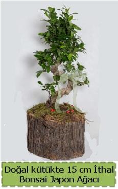 Doğal kütükte İthal bonsai japon ağacı  Antalya Melisa çiçek gönderme
