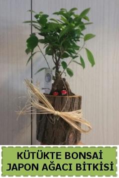 Kütük içerisinde doğal bonsai ağacı  Antalya Melisa çiçekçi telefonları