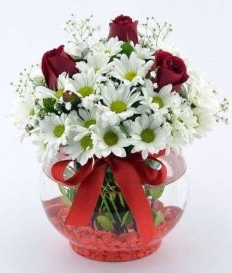 Fanusta 3 Gül ve Papatya  Antalya Melisa internetten çiçek satışı