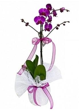 Tekli Mor Orkide  Antalya Melisa çiçek yolla