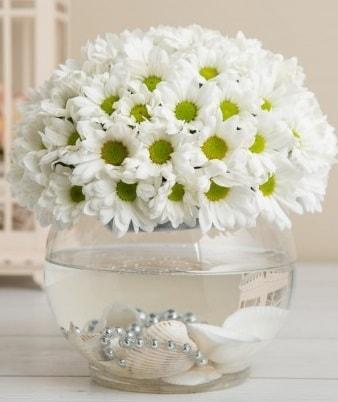 Fanusta beyaz Papatya  Antalya Melisa çiçek satışı