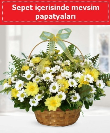 Sepet içerisinde mevsim papatyaları  Antalya Melisa ucuz çiçek gönder