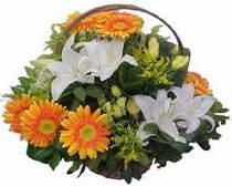 Antalya Melisa online çiçekçi , çiçek siparişi  sepet modeli Gerbera kazablanka sepet